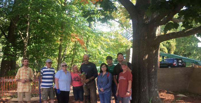 On September 28th, twelve dedicated volunteers donned work gloves, grabbed tools and got to work to save a large red oak tree located between River Walk and the old Searles School. This effort was led by River Walk a project of Great Barrington Land Conservancy.