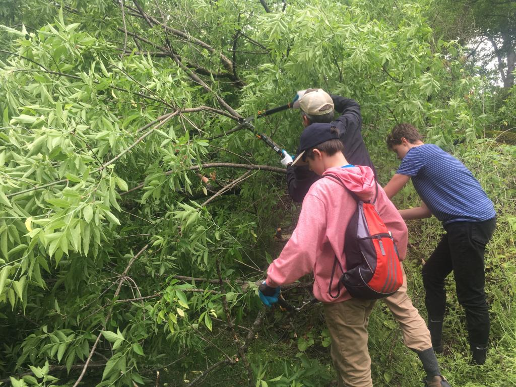 Students pulled garlic mustard, explored the Housatonic River and cleared a blowdown tree that fell that day.