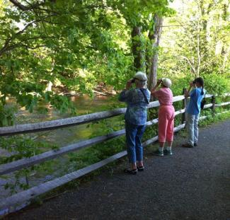Guided Birding offered at River Walk in Great Barrington Thursday's in MAY
